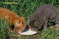 SH32-002z  Cat - kittens drinking at 4 weeks