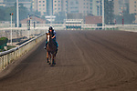 SHA TIN,HONG KONG-MAY 06: Stormy Antarctic,trained by Ed Walker,prepares for the Champions Mile at Sha Tin Racecourse on May 6,2017 in Sha Tin,New Territories,Hong Kong (Photo by Kaz Ishida/Eclipse Sportswire/Getty Images)