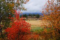 Autumn colors, horses grazing in Kootenai Country Montana