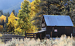 The Scossa Cow Camp in Alpine County, near Markleeville, Ca., seen Monday, Oct. 17, 2011..Photo by Cathleen Allison