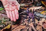 Central & South America: Invertebrates
