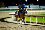 October 31, 2018 : Golden Mischief, trained by Brad Cox, exercises in preparation for the Breeders' Cup Filly & Mare Sprint at Churchill Downs on October 31, 2018 in Louisville, Kentucky. Evers/ESW/Breeders Cup
