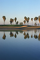 Palm tree lined shoreline<br />