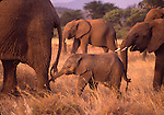 Mammals, care for young