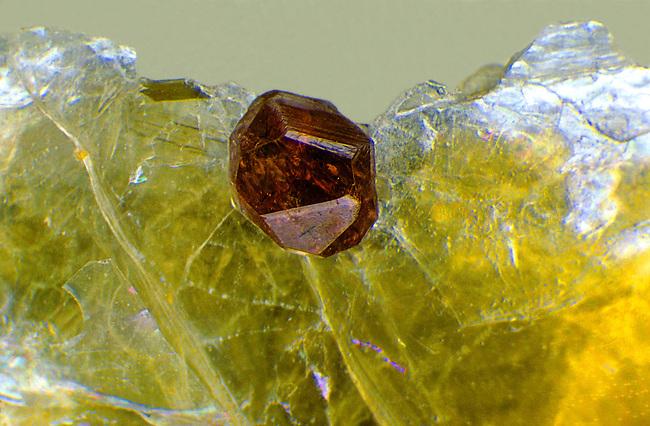 Almandine in Muscovite, Spruce Pine, Mitchell County, North Carolina