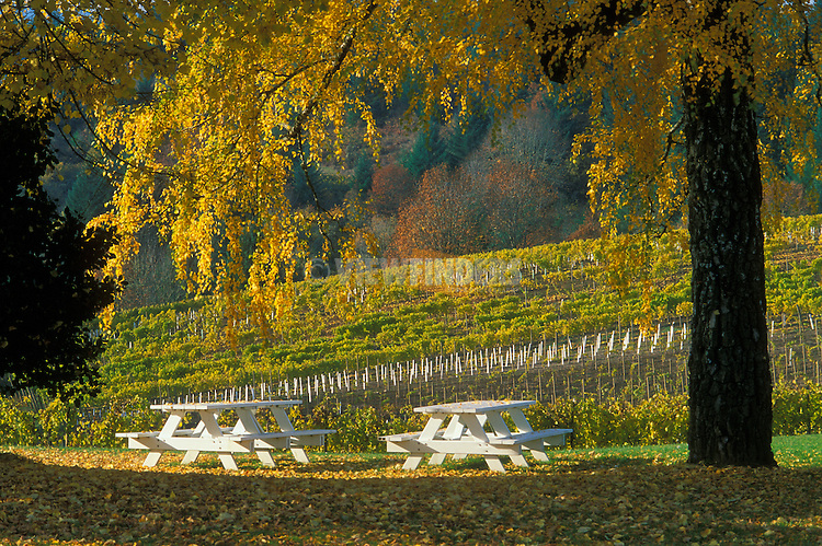 David Hill Vineyards picnic area in the Fall; .Willamette Valley, Oregon..#2330-0814