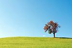 Oesterreich, Salzburger Land, Pinzgau, einzelner Baum im Herbstkleid auf einer Wiese | Austria, Salzburger Land, Pinzgau, meadow with single tree with autumn coloured leaves