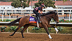DEL MAR, CA - OCTOBER 02: War Flag, owned by Joseph Allen, LLC and trained by Claude R. McGaughey III, exercises in preparation for Breeders' Cup Filly & Mare Turf at Del Mar Thoroughbred Club on November 2, 2017 in Del Mar, California. (Photo by Anna Purdy/Eclipse Sportswire/Breeders Cup)