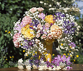 Interlitho-Alberto, FLOWERS, BLUMEN, FLORES, photos+++++,flowers,KL16542,#f#, EVERYDAY