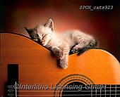 Xavier, ANIMALS, REALISTISCHE TIERE, ANIMALES REALISTICOS, cats, photos+++++,SPCHCATS923,#a#, EVERYDAY