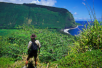 Hiker just off the road into Waipio Valley has a sweeping view.