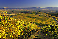 Wine vineyard in autumn with chapel.  Red Willow Vineyards. Columbia Basin. WA.