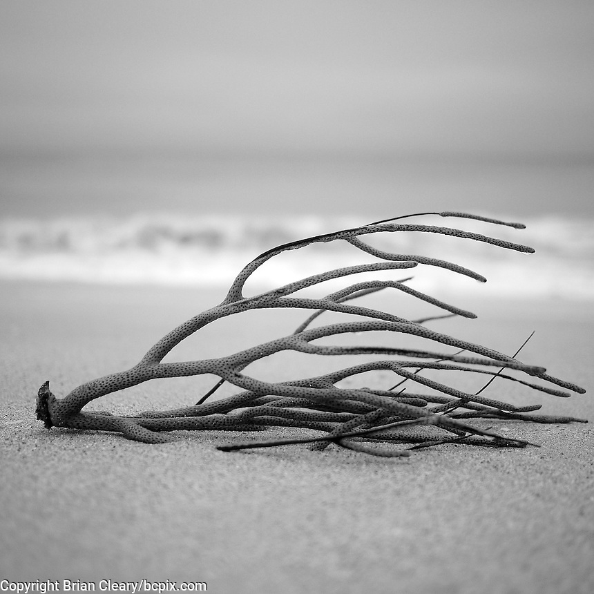 Debris on the beach in South Beach, Miami Beach, FL, November 2012..(Photo by Brian Cleary/www.bcpix.com)