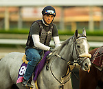 ARCADIA, CA - NOV 01: Partyinthepaddock, owned by Spendthrift Farm LLC and trained by Carla Gaines, exercises in preparation for the Breeders' Cup Juvenile Fillies Turf at Santa Anita Park on November 1, 2016 in Arcadia, California. (Photo by Kazushi Ishida/Eclipse Sportswire/Breeders Cup)