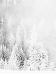 Snow creates a winter wonderland in Yellowstone.