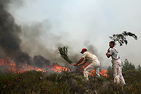 Pictured: Local people battle with the flames in Varnavas, near Kalamos.<br /> Re: A forest fire has been raging in the area of Kalamos, 20 miles east of Athens in Greece. There have been power cuts, country houses burned and children camps evacuated from the area.