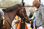 April 04, 2014: H Town Brown gets some attention in the paddock before running in the 6th race at Keeneland on opening day.  Candice Chavez/ESW/CSM