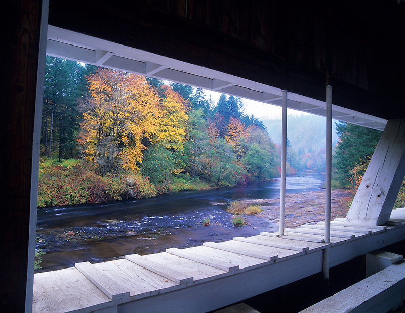 Looking at fall color and Siuslaw River through Wild Cat Bridge. Oregon