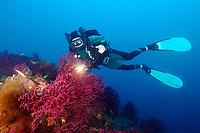 Diver, regulator, light, wall of red coral, gorgonias, fins, mask, wet suit, mediterranean sea, Villefranche sur Mer, France, Europe