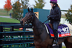 October 28, 2015:  Miss France, trained by Andre Fabre, and owned by Ballymore Thoroughbred Ltd., is entered in the Breeder's Cup Filly & Mare Turf $2,000,000.  Candice Chavez/ESW/CSM