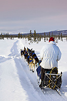 Martin Buser runs in a scrub spruce swamp on his way to Unalakleet after leaving Kaltag on Sunday during Iditarod 2008