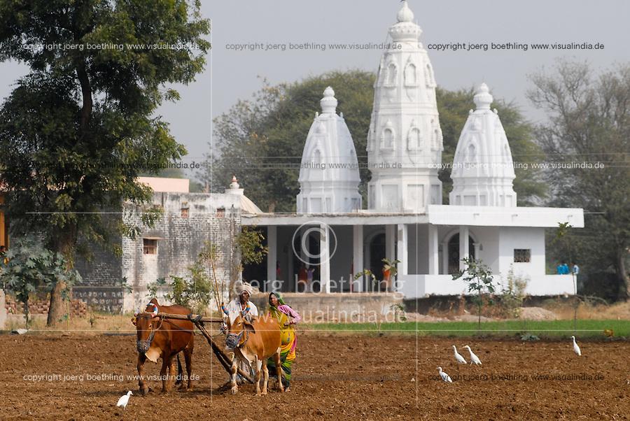 INDIA, Madhya Pradesh , farmer sow wheat with ox in front of Hindu temple / INDIEN, Bauer und Baeuerin saehen Weizen mit Ochsen  vor Hindutempel