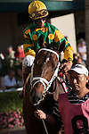 John Velasquez and Palace Malice head to the track for the Gulfstream Park Handicap (G2). Gulfstream Park, Hallandale Beach Florida. 02-08-2014