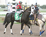 Ultimate Eagle post parade. Graybar with Edgar Prado wins the 57th running of the Grade 1 Donn Handicap for 4 year olds & up, going 1 1/8 mile, at Gulfstream Park.  Trainer - Todd Pletcher.  Owner - Twin Creek Racing Stable
