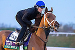 October 29, 2015:  Red Rifle, trained by Todd A. Pletcher and owned by Twin Creeks Racing Stable LLC, exercises in preparation for the Longines Breeders' Cup Turf at Keeneland Race Track in Lexington, Kentucky on October 29, 2015. Jon Durr/ESW/CSM