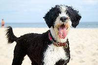 Dog at the beach, Bulls Neck Bay, NY