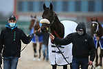 February 6, 2021: Mr. Jagermeister (6) before the running of the King Cotton Stakes at Oaklawn Racing Casino Resort in Hot Springs, Arkansas on February 6, 2021. Justin Manning/Eclipse Sportswire/CSM