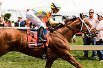 BALTIMORE, MD - MAY 20:  Noble Bird #7  with julien Leparoux aboard. wins 46th running 0f the Pimlico Special at Pimlico Ractrack on May 20, 2016, in Baltimore, MD. (Photo by Sue Kawczynski/Eclipse Sportswire/Getty Images)