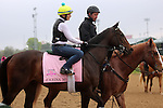 LOUISVILLE, KY - APRIL 23: Carina Mia (Malibu Moon x Miss Simpatia, by Southern Halo) walks onto the track at Churchill Downs while training for the Kentucky Oaks. Owner Three Chimneys Farm LLC, trainer William I. Mott. (Photo by Mary M. Meek/Eclipse Sportswire/Getty Images)