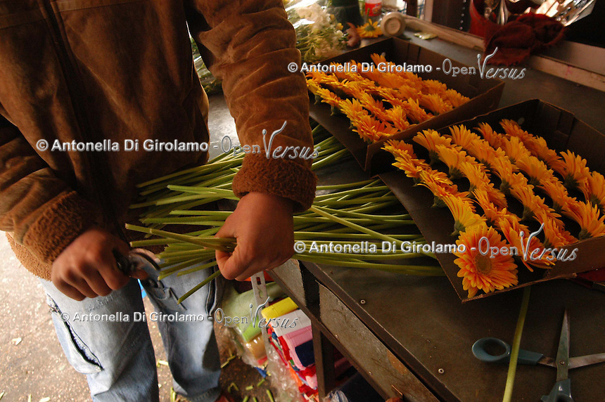 Fiorista in un negozio di fiori. Florist in a flower shop..