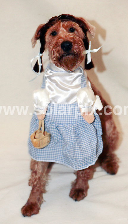 **ALL ROUND PICTURES FROM SOLARPIX.COM**.**NO UK NEWSPAPER PUBLICATION **UK MAGAZINE PUBLICATION ONLY** AND NO PUBLICATION IN FRANCE, SCANDINAVIA, AUSTRALIA AND GERMANY** .For the dog who has everything this Christmas Warner Bros have produced Wizard Of Oz outfits based on the characters from the famous 1939 movie starring Judy Garland..JOB REF:5487-SFE       DATE:11_12_07 .**MUST CREDIT SOLARPIX.COM OR DOUBLE FEE WILL BE CHARGED* *UNDER NO CIRCUMSTANCES IS THIS IMAGE TO BE REPRODUCED FOR ANY ONLINE EDITION WITHOUT PRIOR PERMISSION*