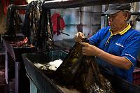 Yogyakarta, Java, Indonesia.  Batik Workshop.  Male Worker Examining Batik Cloth after Dying.