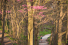 April 18, 2017; A student jogs on the trail around St. Joseph Lake. (Photo by Barbara Johnston/University of Notre Dame)