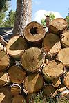 Wood pile, tree, chimney.