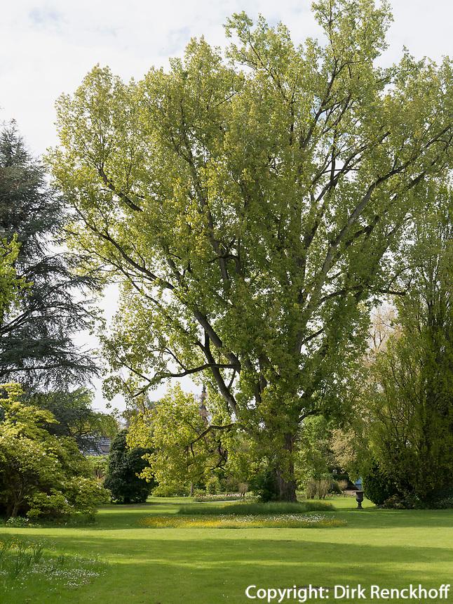 Gartenanlage Stiegeler Park, Konstanz, Baden-Württemberg, Deutschland, Europa<br /> Stiegeler Park gardens, Constance, Baden-Württemberg, Germany, Europe