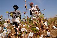Burkina Faso, organic and fairtrade cotton project /Burkina Faso, Anbau von fairtrade und Biobaumwolle auf Biohof von Farmerin Nana Pauline und ihrem Mann Kabre Francois im Dorf D´apuri bei Ouagadougou