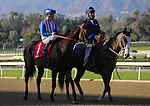 Bayren with Gary Stevens aboard win an allowance race at Santa Anita Park in Arcadia, California on February 13, 2014. (Zoe Metz/ Eclipse Sportswire)