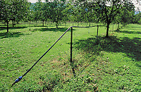Irrigation d'une noyeraie.Station exprimentale de Creysse.Noix du Périgord.46-Lot.France