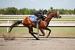 #66Fasig-Tipton Florida Sale,Under Tack Show. Palm Meadows Florida 03-23-2012 Arron Haggart/Eclipse Sportswire.