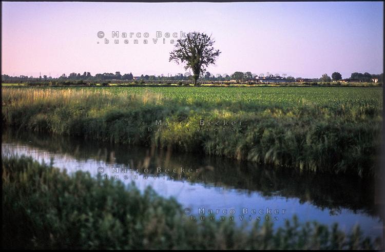 Morimondo (Milano). Il Naviglio di Bereguardo e un albero isolato tra i campi --- Morimondo (Milan). The canal Naviglio di Bereguardo and a lonely tree in the fields