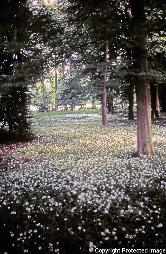 Scenic grove of trees in Versailles.