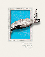 Graphic Design for Marine Environment related issues, Turtle