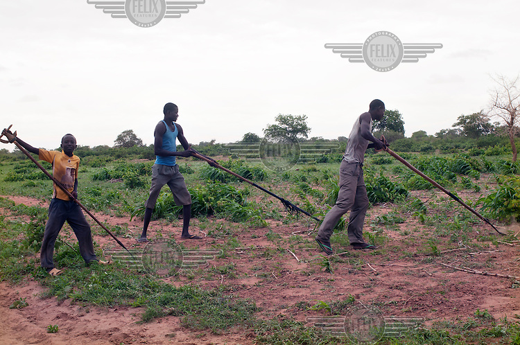 Two men and a boy hoe a field in preparation for planting after a rare night of rain. A drought in southern Niger has affected up to 8 million people.