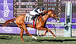 November 1, 2019: Connections for Sharing, winner of the Breeders' Cup Juvenile Fillies Turf on Breeders' Cup World Championship Friday at Santa Anita Park on November 1, 2019: in Arcadia, California. Bill Denver/Eclipse Sportswire/CSM