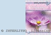 Alfredo, FLOWERS, paintings, BRTOCH40561CP,#F# Blumen, flores, illustrations, pinturas