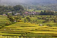 Jatiluwih, Bali, Indonesia.  Terraced Rice Fields.  Village in Background.